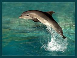 животные, дельфины