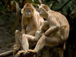 А кому сейчас легко (авт Emin) обои для рабочего стола 1024x768 кому, сейчас, легко, авт, emin, животные, обезьяны