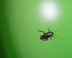 животные, насекомые