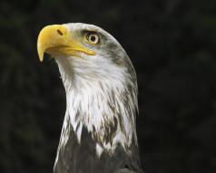 животные, птицы, хищники