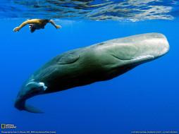 животные, киты, кашалоты