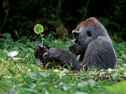 животные, обезьяны