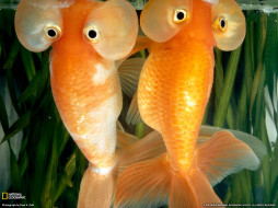 животные, рыбы