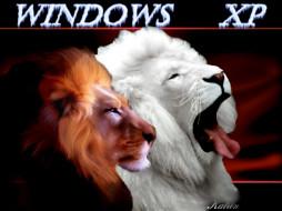 lions, remix, компьютеры, windows, xp