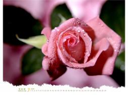 календари, цветы