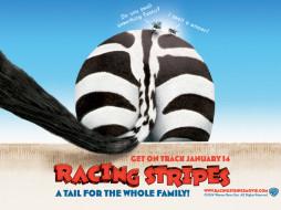 racing, stripes, 04, мультфильмы