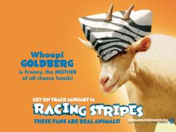 racing, stripes, 03, мультфильмы