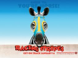 racing, stripes, 01, мультфильмы