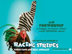 racing, stripes, 02, мультфильмы
