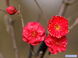 цветы, цветущие, деревья, кустарники