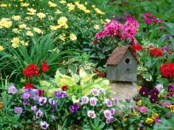 цветы, разные, вместе