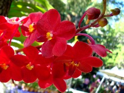 черная орхидея кино.