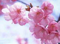 """Предпросмотр схемы вышивки  """"цветочки """". цветочки, предпросмотр."""