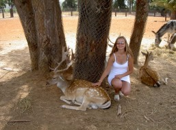 ispanija, safari, животные, олени