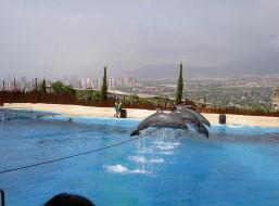 ispanija, mundomar, delfiny, животные, дельфины