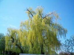 природа, деревья