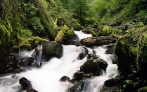 forest, stream, природа, реки, озера