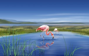 рисованные, животные, птицы, фламинго