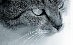 животные, коты