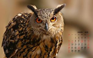 календари, животные