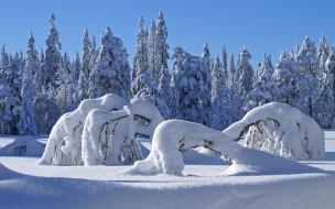 обои для рабочего стола 1920x1200 природа, зима