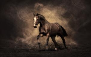 животные, лошади