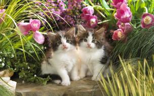обои для рабочего стола 1920x1200 животные, коты