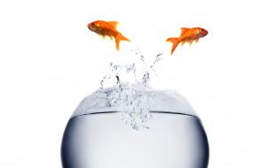 Красивые аквариумные рыбки фото.