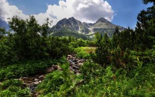 обои для рабочего стола 2560x1600 природа, горы, облака, небо, зелень, сосны, ручей, день