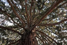 обои для рабочего стола 2288x1520 природа, деревья, ветки, крона, гигант