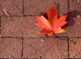 природа, листья, листок, тротуар