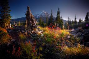 обои для рабочего стола 1920x1280 природа, горы, вечер, блики, камни, гора, лес, коряга, кусты, трава