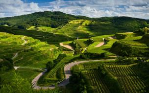 природа, поля, дорога, пейзаж, виноградники