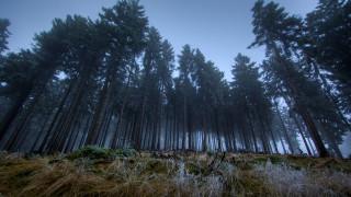 природа, лес, темно, сумерки
