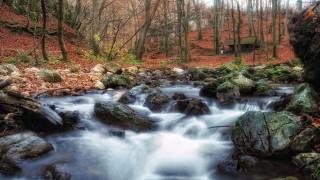природа, реки, озера, дом, камн, лес, река