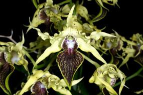 Орхидея Дракула обои для рабочего стола 3000x2006 орхидея, дракула, цветы, орхидеи, салатовый, экзотика