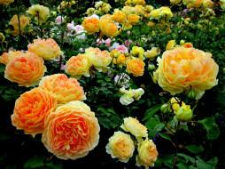 Обои для рабочего стола 3264x2448 цветы