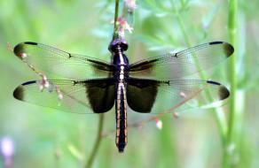 Обои животные, стрекозы, крылья скачать обои для рабочего стола,картинки на рабочий стол,заставки,изображения из раздела Животны