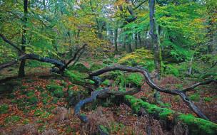 обои для рабочего стола 2560x1600 природа, лес, листья, коряги, осень, деревья