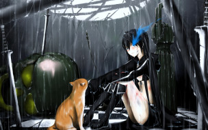 аниме, black, rock, shooter, кошка, дождь, девушка