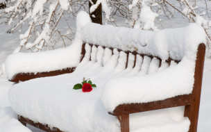 обои для рабочего стола 2560x1600 природа, зима, роза, скамейка, снег