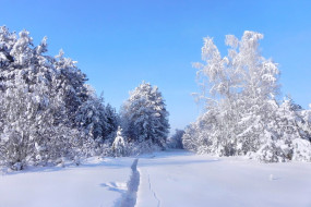 природа, зима, мороз, стужа, снег, деревья, колея