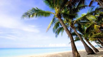природа, тропики, берег, пальмы, море