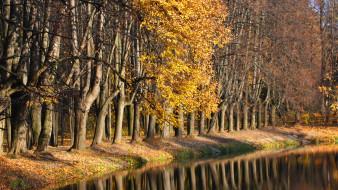 природа, лес, осень, листва