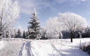 обои для рабочего стола 1920x1200 природа, зима, день, деревья, мороз, снег