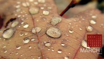 листок, капли