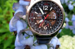 бренды, orient, стрелки, цветы, часы