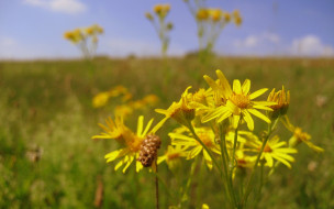 жёлтые полевые цветы фото и названия
