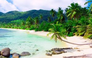 природа, тропики, остров
