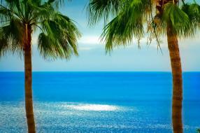 природа, тропики, пальмы, горизонт, океан
